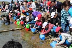 20140409鮭稚魚放流式2